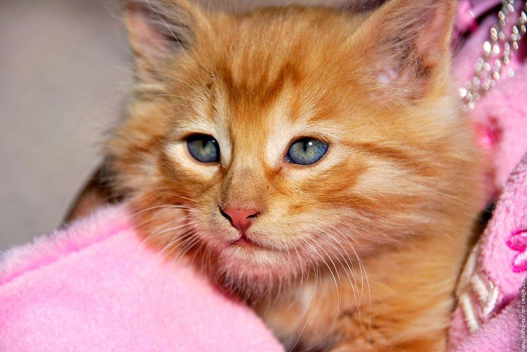 Elodie tigre blanc page 8 - Photo chaton trop mignon ...